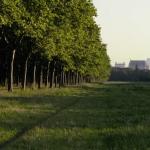 «Le bois dont les rêves sont faits» de Claire Simon