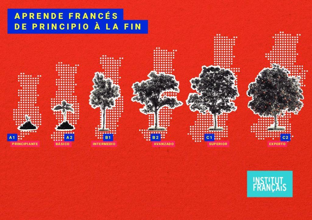 Niveles del Institut français