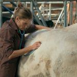Preestreno 'Una veterinaria en la Borgoña'