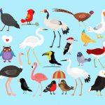 CHIQUITECA Cuentacuentos «Les oiseaux conteurs» con Brigitte Arnaudiès